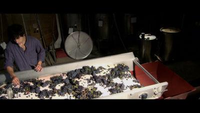 vins-banyuls-table-tri